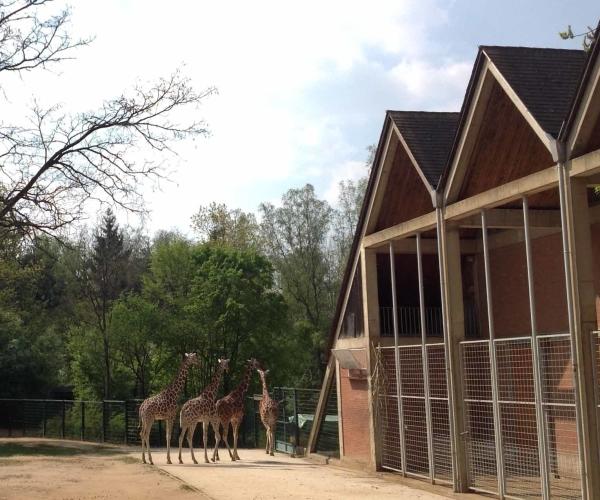 Alemanha, Nuremberg, Zoológico, Tiergarten – Foto Nathalia Molina @ComoViaja