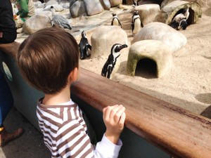 Foto Nathalia Molina @ComoViaja - pinguins