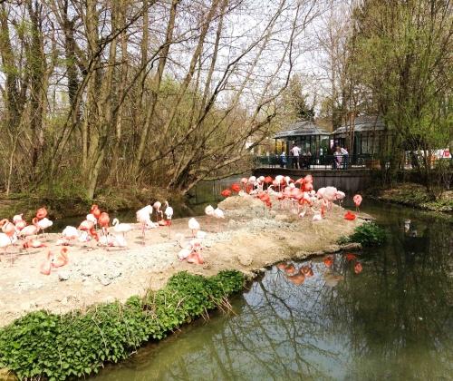 Munique, Alemanha, Zoológico, Crianças, Hellabrunn – Foto Nathalia Molina @ComoViaja (106)