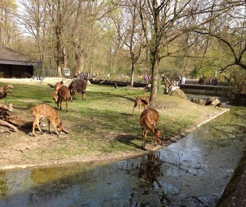 Munique, Alemanha, Zoológico, Crianças, Hellabrunn – Foto Nathalia Molina @ComoViaja (33)