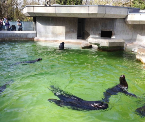Munique, Alemanha, Zoológico, Crianças, Hellabrunn – Foto Nathalia Molina @ComoViaja (90)