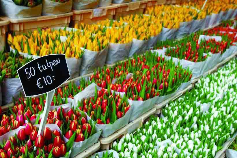 Amsterdã, Holanda, Flores, Mercado - Foto Divulgação (3)